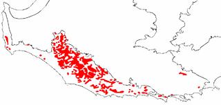 Karri forest